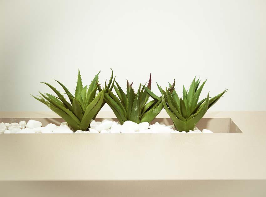Aloe Vera for acne treatment