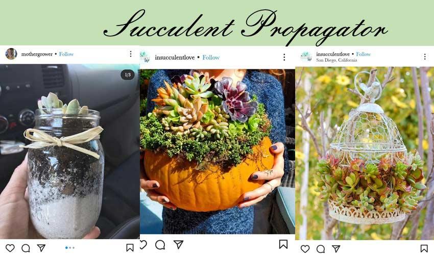 succulent-propagator-diy-garden-project-ideas.jpg